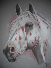 Appaloosa, Pferde, Malerei