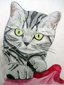 Aquarellmalerei, British kurzhaar, Katze, Aquarell