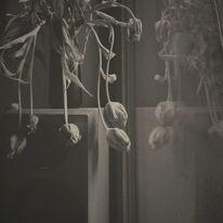 Schwarzweiß, Natur, Freunde, Fotografie