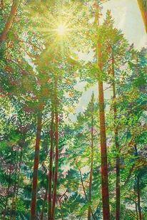 Wald, Baum, Nadel, Sonnenlicht