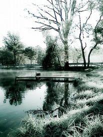 Rasen, Baum, Frost, Teich