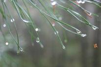 Pflanzen, Makro, Fotografie, Natur