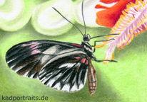 Blumen, Schmetterling, Sommer, Zeichnungen