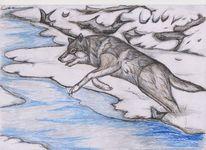 Zeichnung, Wolf, Buntstiftzeichnung, Tiere