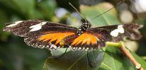 Schmetterling, Flügel, Blätter, Fotografie
