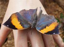 Hand, Schmetterling, Flügel, Fotografie