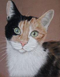 Haustier, Tierportrait, Tiere, Realismus