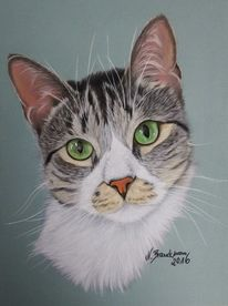 Tiere, Pastellmalerei, Tiermalerei, Katze