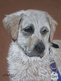 Pastellmalerei, Hund, Hundeportrait, Tierzeichnung