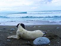 Natur, Strand, Hund, Landschaft