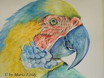 Lebewesen, Gelb, Aquarellmalerei, Papagei