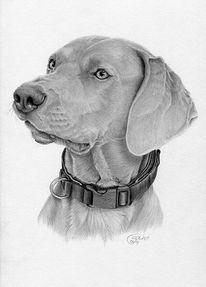 Hund, Zeichnung, Portrait, Bleistiftzeichnung