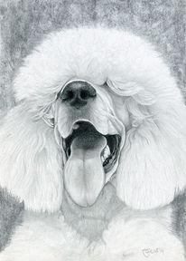 Kohlezeichnung, Grafit, Hund, Pudel