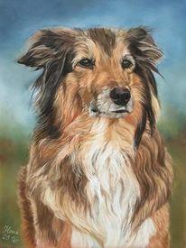Hundeportrait, Schäferhund, Pastellmalerei, Mischling