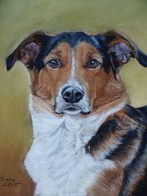 Hundeportrait, Kreidezeichnung, Berner senne, Tierportrait
