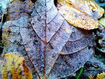 Fotografie, Natur, Herbst, Frost