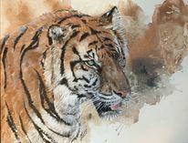 Braun, Tiger, Wildtiere, Malerei