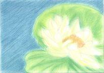 Blumen, Zeichnungen, Seerosenteich