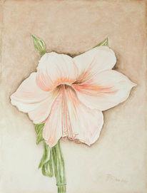 Blumen, Aquarellmalerei, Amaryllis, Aquarell