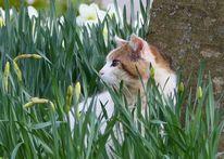 Katze, Blüte, Nazissen, Grün