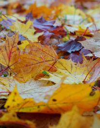 Herbst, Blätter, Fotografie, Oktober