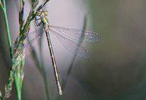 Hauchzart, Waldlicht, Libelle, Spektralfarbe
