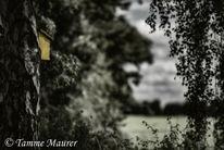 Vogelhaus, Baum, Wiese, Platz