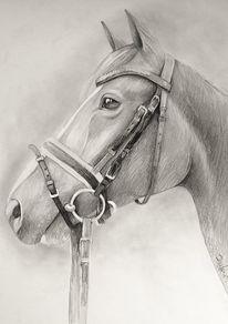 Pferde, Tiere, Zaumzeug, Zeichnungen