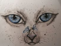 Grau, Weiß, Blau, Katze