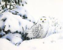 Winter, Schnee, Landschaft, Eule