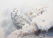 Eule, Vogel, Winter, Schnee