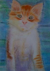 Katze, Pastellmalerei, Tiere, Zeichnungen