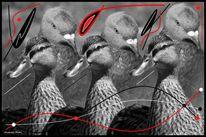 Ente, Fotografie, Schwarz, Tiere