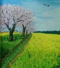 Frühling, Kirschblüte, Raps, Malerei