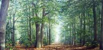 Licht, Landschaft, Wald, Lichtblicke