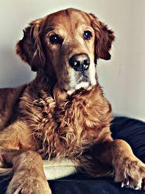 Tiere, Hund, Fotografie