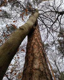Baum, Natur, Wald, Fotografie
