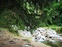 Baum, Natur, Wasser, Pflanzen
