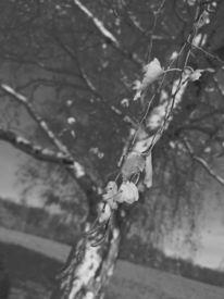 Pflanzen, Baum, Natur, Fotografie