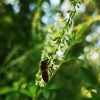 Tiere, Insekten, Fotografie