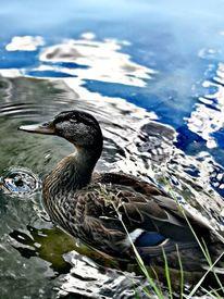 Natur, Wasser, Lebewesen, Tiere
