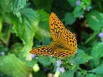 Leben, Tiere, Schmetterling, Pflanzen