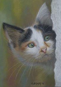 Portrait, Neugier, Katze, Haustier