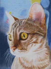 Zeichnung, Katze, Haustier, Bengalkatze