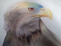 Papier, Vogel, Farben, Greifvogel