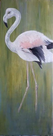 Flamingo, Bunt, Grün, Natur