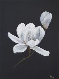 Schwarz weiß, Blüte, Magnolien, Blumen
