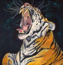 Tiger, Tigerkopf, Katze, Raubtiergebiss