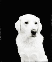 Hund, Fotografie, Wasfüreinesüße