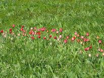 Grün, Tuplen, Blüte, Gras